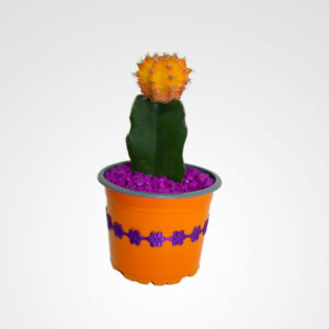 suculenta cactus floristeria