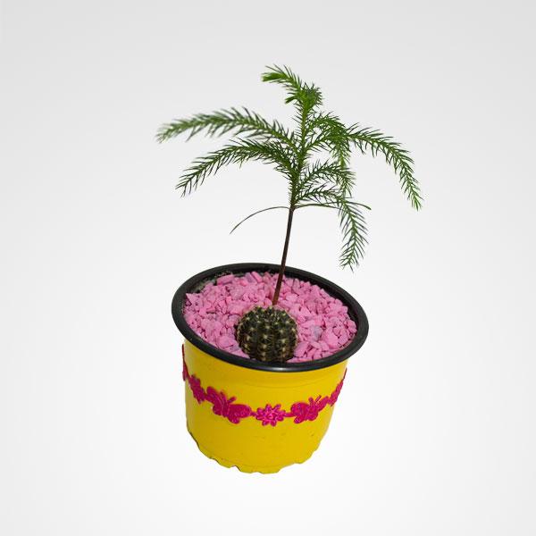 suculenta floristeria bogota
