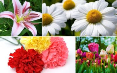 Tipos de flores según la temporada